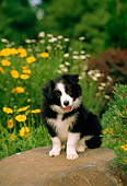 PUP 06 CE0013 01