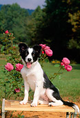 PUP 06 CE0014 01