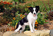 PUP 06 CE0016 01