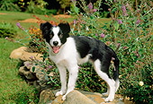 PUP 06 CE0017 01