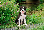 PUP 06 CE0020 01