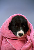 PUP 06 DC0009 01