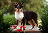 PUP 06 GR0008 01