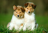 PUP 06 GR0013 02