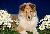 PUP 06 GR0017 01