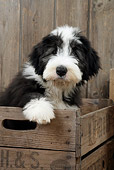 PUP 06 JD0002 01
