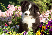 PUP 06 LS0002 02