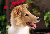 PUP 06 RC0005 01