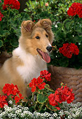 PUP 06 RC0006 01