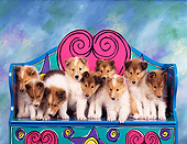 PUP 06 RK0006 11