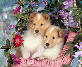 PUP 06 RK0029 02