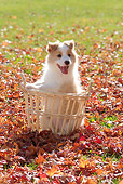 PUP 06 YT0003 01
