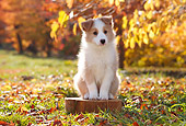 PUP 06 YT0004 01