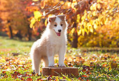 PUP 06 YT0005 01