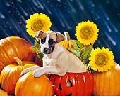 PUP 07 RK0094 02