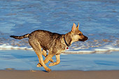 PUP 07 KH0001 01