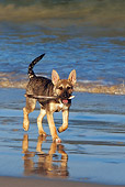 PUP 07 KH0002 01