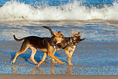 PUP 07 KH0003 01
