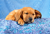 PUP 07 RC0001 01