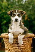 PUP 07 RC0002 01