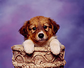 PUP 07 RK0022 01