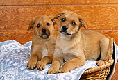PUP 07 RK0043 01