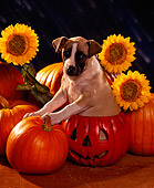 PUP 07 RK0094 04