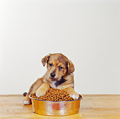 PUP 07 RS0011 01
