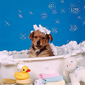 PUP 07 RS0088 02