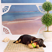 PUP 07 RS0098 02