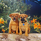 PUP 07 RS0117 04