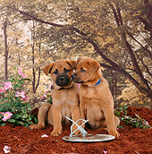 PUP 07 RS0119 05