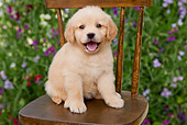 PUP 08 BK0002 01