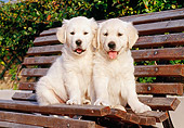 PUP 08 CB0001 01