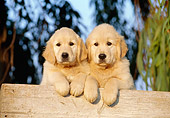 PUP 08 CB0002 01