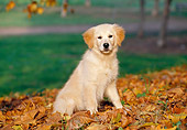 PUP 08 CB0008 01