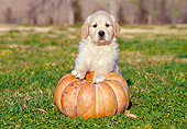PUP 08 CB0011 01