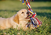 PUP 08 CB0014 01