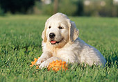 PUP 08 CB0021 01