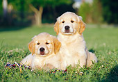 PUP 08 CB0022 01