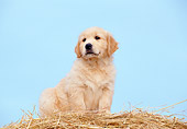 PUP 08 CB0025 01