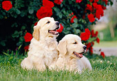 PUP 08 CB0030 01