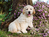 PUP 08 CB0034 01