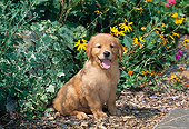 PUP 08 CE0046 01