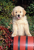 PUP 08 CE0048 01
