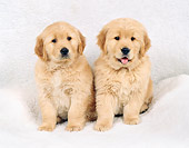 PUP 08 FA0011 01