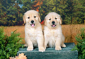 PUP 08 FA0022 01