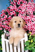 PUP 08 FA0029 01