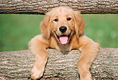PUP 08 GR0080 01