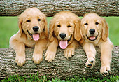 PUP 08 GR0095 01